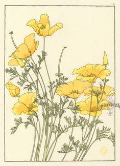 Botanicals. Jeannie Foord. Обсуждение на LiveInternet - Российский Сервис Онлайн-Дневников