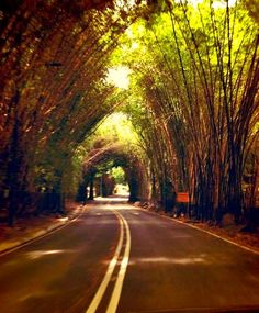 Bamboo Tunnel at the Country Club or why not Tunnel of Love! Caracas, Venezuela