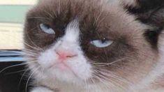 人気沸騰中のメス猫「グランピー・キャット」