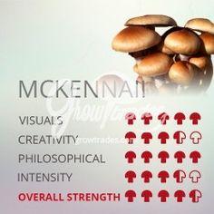 The magic mushrooms Psilocybe cubensis McKennaii is lately the most demanded variety. Growing Mushrooms At Home, Psilocybin Mushroom, Mushroom Grow Kit, Mushroom Cultivation, Urban Farmer, Organic Farming, Growing Vegetables, Fried Fish, Fungi