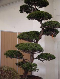 Japan garten kultur plant und gestaltet japanische g rten for Gartengestaltung chinesisch