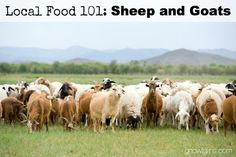 Local Food 101: Sheep and Goats | How can you know if a particular food source is a wise and healthy choice? You start by talking to the farmer who produces it, asking questions that pertain to the type of food you're buying. In this post, we'll discuss sheep and goats, including processing options and how to find good recipes. Use these questions when approaching your local farmer or source. | GNOWFGLINS.com