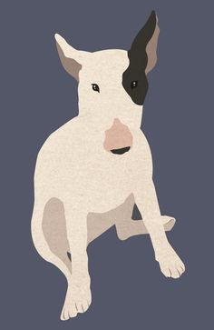 sketches and other thingies: english bull terrier