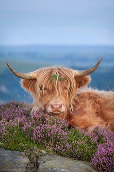 """Am I not the prettiest bovine in this pasture? Of course I am!"""