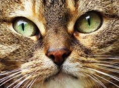 How To Get Rid Of Cat/Dog Urine Smells.  Cat/Dog Urine Odors are easily removed with the simple recipe below.   Clean Your Carpet of Cat urine or Dog Urine smells. This is the best dog and cat urine removal recipe. There are no catches or sales pitches. This recipe to remove cat/dog urine odor is extremely effective and is completely free.