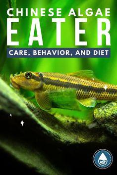 Brine Shrimp, Sand And Gravel, Aquascaping, Catfish, Aquarium Fish, Fish Tank, Southeast Asia, Habitats, Behavior