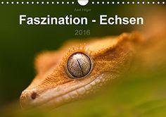 Faszination - Echsen (Wandkalender 2016 DIN A4 quer): Wir staunen, wenn wir diese  fremdartigen Wesen betrachten, die so wirken, als kämen sie aus einer anderen Welt. (Monatskalender, 14 Seiten) von Axel Hilger http://www.amazon.de/dp/3664144430/ref=cm_sw_r_pi_dp_Vawjvb1SMC3CA