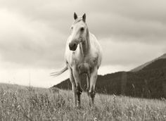Sweet Summer Black and White Horse Photograph by ApplesAndOats, $10.00
