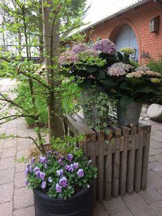 Fru Pedersens have: Hortensiaer i blide farver.