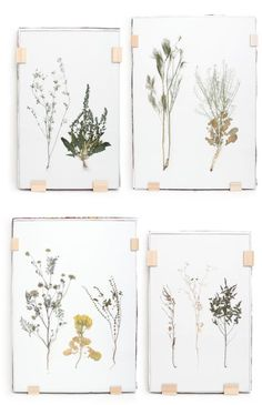 Pretty pressed flowers. /