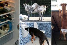 Chlupatá, třeštěná a nešikovná. #Funny #Animals