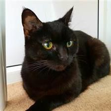 Pablo Bow - Cat Rehoming & Adoption - Wood Green Animals Charity