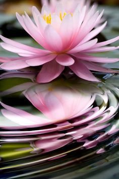 LOTUS lotus lotus lotus