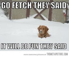 funny winter dog Quotes