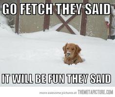 Go fetch…