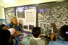 Our experience includes nature centers, interpretive centers, discovery centers, aquariums, and zoos.