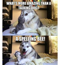 Funny animal pictures memes to make you laugh. Check this collection of latest animal pictures meme dump of the day Husky Jokes, Funny Shit, Funny Animal Jokes, Really Funny Memes, Funny Puns, Stupid Funny Memes, Cute Funny Animals, Funny Relatable Memes, Funny Animal Pictures