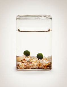 Marimo Moss Ball Aquarium Set, Warm hue - Luck In a bottle