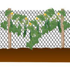 Comment tuteurer les concombres Comment Planter, Permaculture, Agriculture, Garden Plants, Plant Leaves, Outdoor Structures, Gardening, Google, Nature