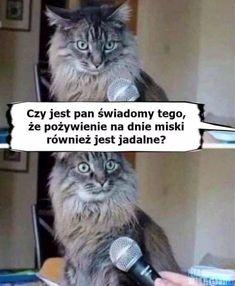 Memes Humor, Cat Memes, Avatar Ang, Polish Memes, Weekend Humor, Funny Mems, Pretty Animals, Interview, Cute Beauty