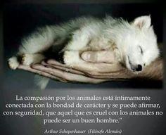 El que es cruel con los animales no,puede ser un buen hombre