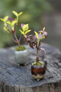 that pot looks like an acorn! genius. and really makes me hope that little tree is an oak.