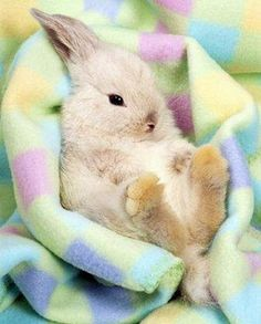 Snuggle bunny (My rabbit had the same blanket! Hamsters, Baby Animals, Funny Animals, Cute Animals, Baby Bunnies, Cute Bunny, Easter Bunny, Happy Easter, Bunny Rabbits