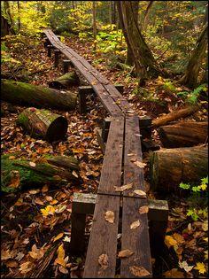 Wood Plank Trail to Greenstone Falls Waterfall, Porcupine Mountains Wilderness State Park, Upper Peninsula, Michigan | KGC Photo