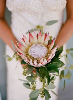Backyard Chattanooga Wedding by Austin Gros Wedding Photography Simple Wedding Bouquets, Protea Wedding, Bride Bouquets, Simple Weddings, Bridesmaid Bouquet, Flower Bouquets, Wedding Dresses, Unique Flower Arrangements, Unique Flowers