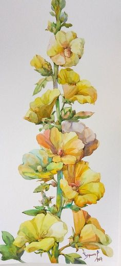 Floral Fine Art Watercolor Painting Yellow Mallow Hollyhock