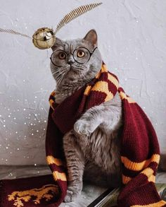 Harry Potter Universal, Animal Photography, Animals Beautiful, Cats And Kittens, Bird, Funny, Universe, Wallpapers, Projects