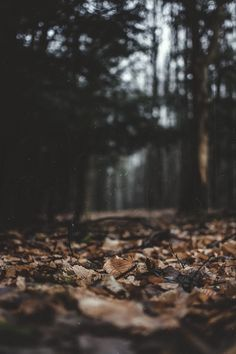 autumn | Tumblr