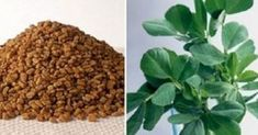 Interesting health benefits of Bitter Fenugreek Seeds (Methi)~ Bitter yellow brown seeds with bitter taste, Fenugreek help to lower LDL cholesterol levels. They help to prevent colon cancer by binding themselves to toxins. With fibre and Lose Weight Naturally, Reduce Weight, Herbal Colon Cleanse, Lowering Ldl, Lower Ldl Cholesterol, Cholesterol Levels, Reduce Hair Fall, Hcg Diet, Nutrition