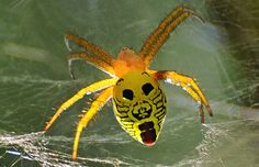 Spider with face pattern. (Photo by Darlyne Murawsk/National Geographic Creative/Caters News)