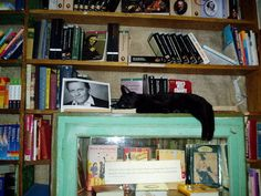 Cat asleep, Shakespeare and Co, Paris Bookshop