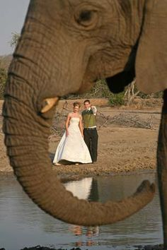 Safari Weddings in South Africa Destination wedding idea