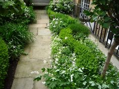Carlyle Square | Projects | Richard Miers - Garden Design Hunters, Planting, Garden Design, Gardens, Backyard, Houses, Projects, Outdoor, Homes