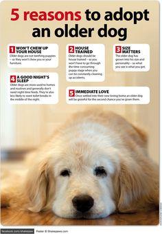 5 reasons to adopt an older dog - Shake Paws