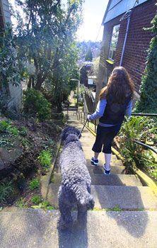 Dog-Friendly Portland, Oregon