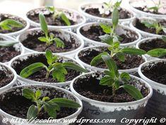 Seeds, Garden, Syrup, Plant, Garten, Lawn And Garden, Gardening, Grains, Outdoor