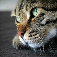 Cats are best, the cutest! Pretty Cats, Beautiful Cats, Animals Beautiful, Pretty Kitty, Animals And Pets, Cute Animals, Photo Chat, Cat Photography, Cat Life