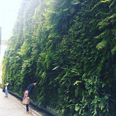 This is stunning!! #livingwall #travel #sanfrancisco #sfmoma #art #plants #verticalgarden #ferns #plantwall #landscape_lovers #landscapephotography