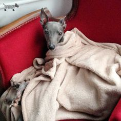 Snug As A Bug In Rug Doggymember Lester Bed Bites