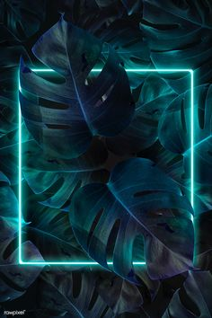 Hintergrund Green neon lights frame in a tropical jungle mockup design Framed Wallpaper, Phone Screen Wallpaper, Iphone Background Wallpaper, Aesthetic Iphone Wallpaper, Galaxy Wallpaper, Aesthetic Wallpapers, Tropical Background, Neon Light Wallpaper, Colorful Wallpaper