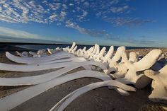 Whale bones on the beach in San Ignacio Lagoon, Baja California. Photo ©Wade Henrichs