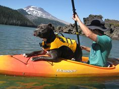 This reminded me of our efforts to get Ginny our French Brittany out on the water last summer. She has the same Ruffwear FloatCoat as this dog from Ruffwears own Blog.    http://www.firelt.com/Ruffwear