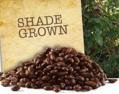 Shade Grown Organic Coffee-Healthier And Tastier Than Other Types