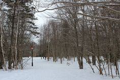Life on a Canadian Island: Winter Geocaching ~ Victoria Park Forest