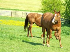 How To Avoid Toxic Plants In The Horse Pasture