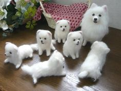 Animals Karachi, Japanese Spitz puppies available for sale age 2 month old very playful good health and viccinted contact Animals And Pets, Baby Animals, Funny Animals, Cute Animals, American Eskimo Dog, Cute Dogs And Puppies, Baby Dogs, Doggies, Beautiful Dogs